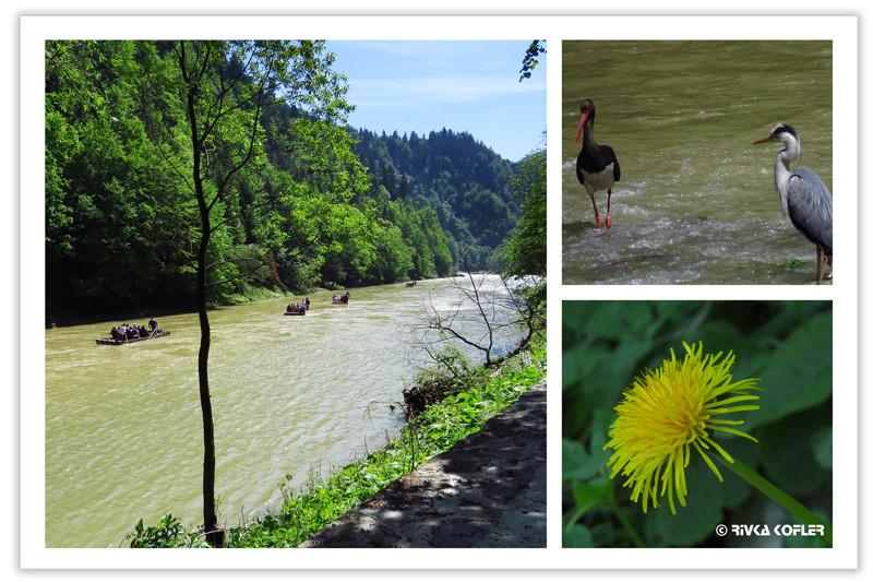עופות, פרח צהוב, נהר