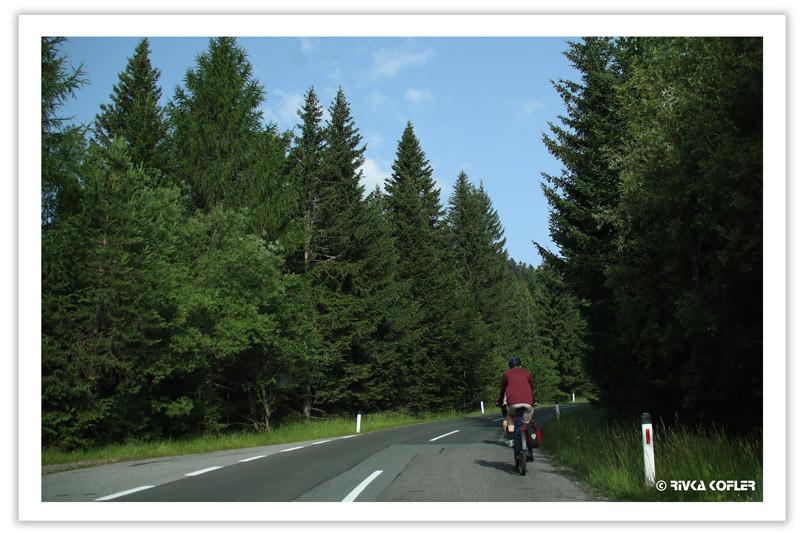 רוכב אופנים, כביש, יער