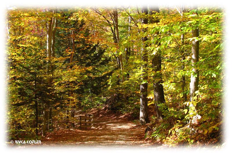 יער פלאם גורג', ניו המפשייר