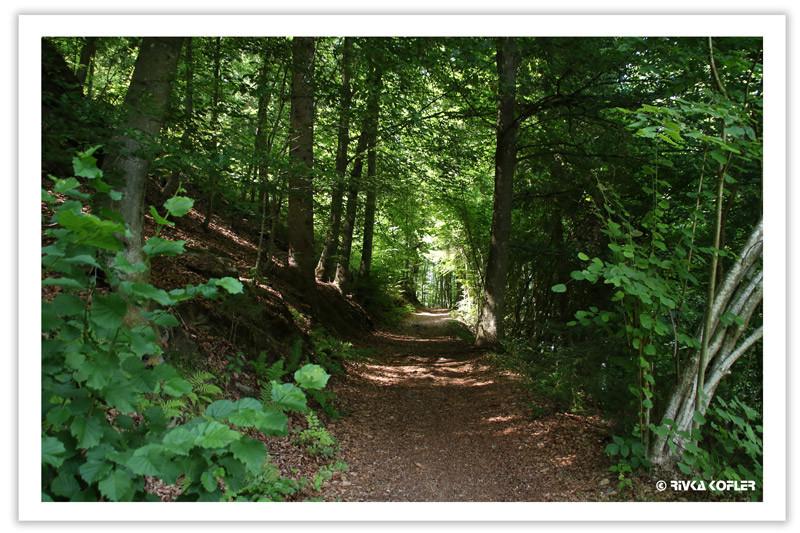 עצים ביער, שביל