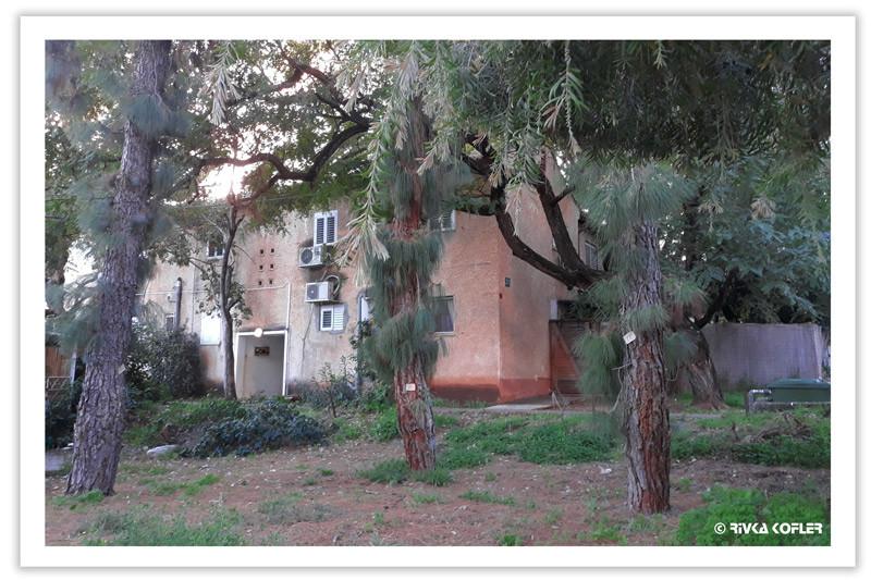 עצים סובבים את מבני השכונה