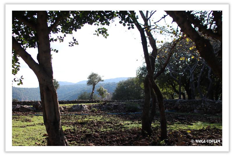 עצים ותצפית להרים
