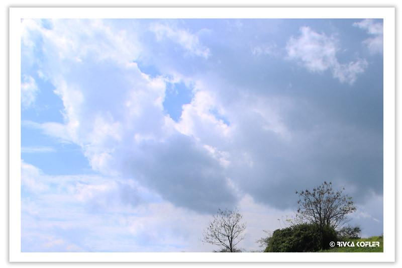 שמיים מעוננים ושיח