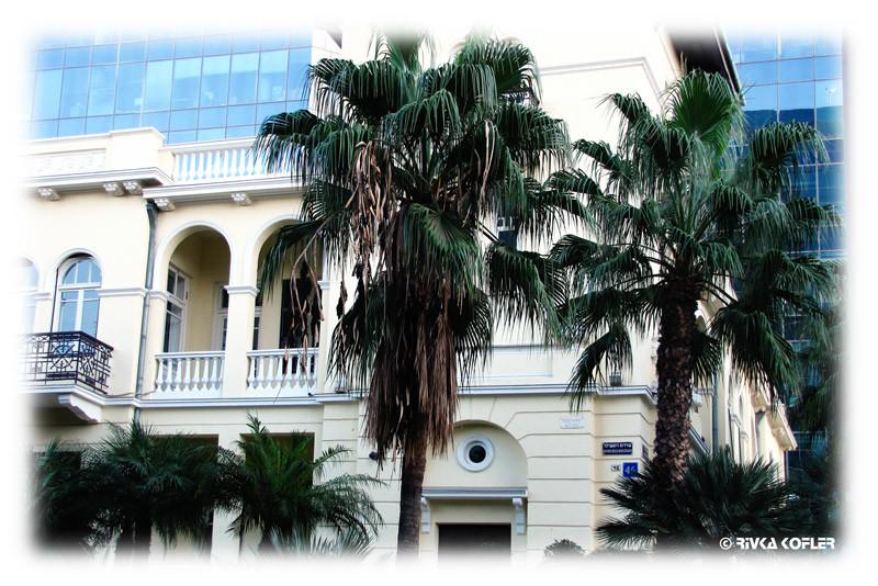 עצי דקל ומרפסות