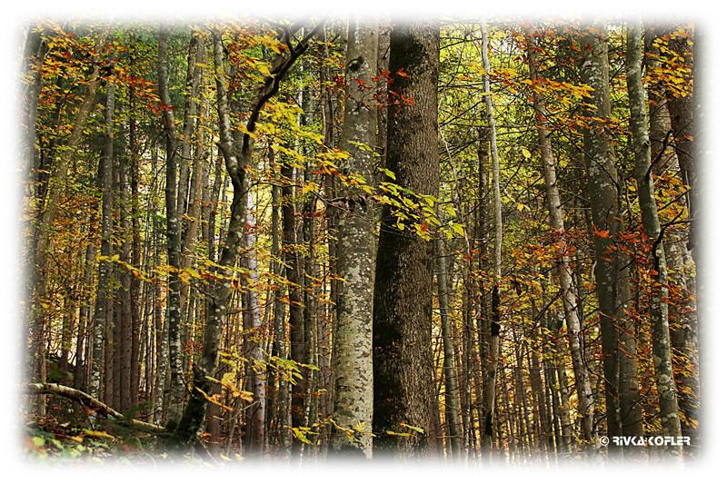יער נוישווינשטיין