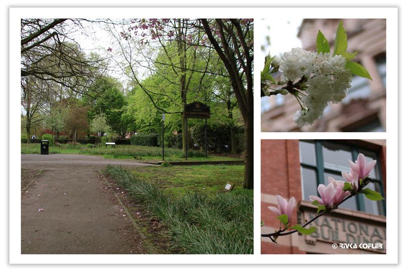 עונת הפריחה
