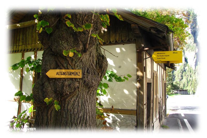 שלט קטן על עץ
