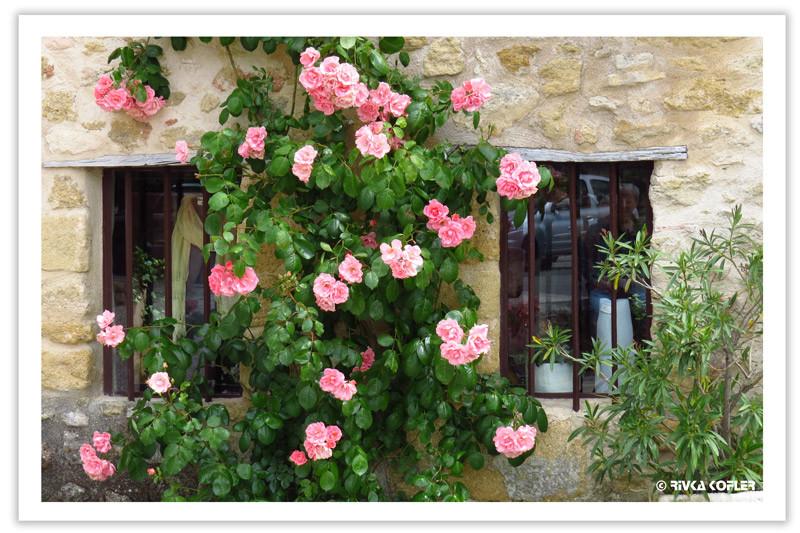 ורדים של אביב