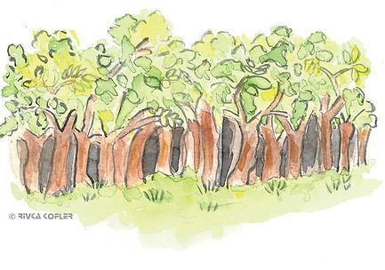 ציור עצים ביער