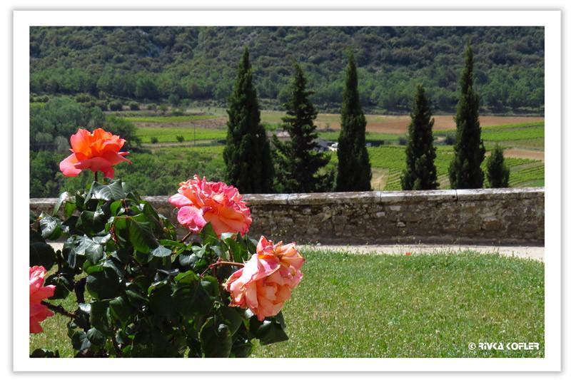 ורדים וברושים