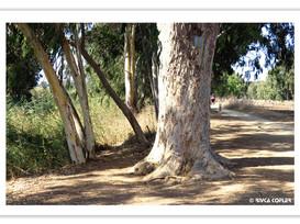 גן לאומי, נחל אלכסנדר