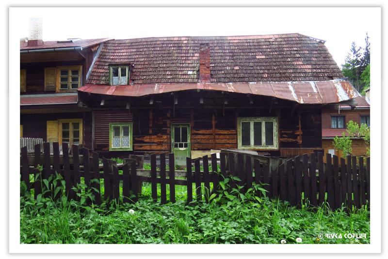 בית, גדר, צמחיה