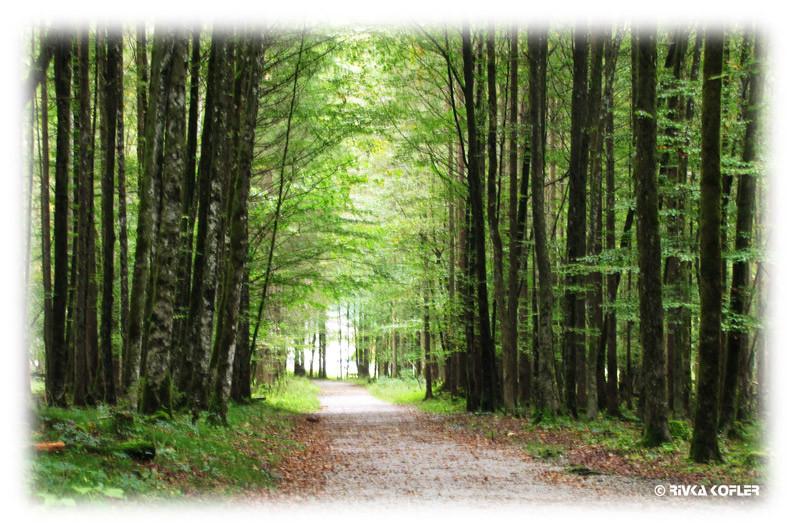 יער באוורי