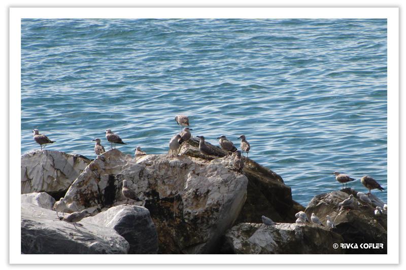 ציפורים על סלע