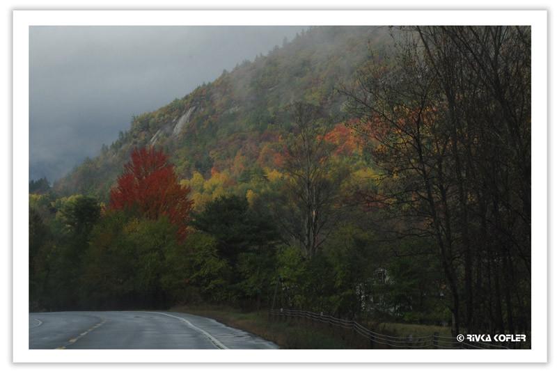עצים בצבעי שלכת, בית מסתתר בצד ימין של בתמונה, בין העצים