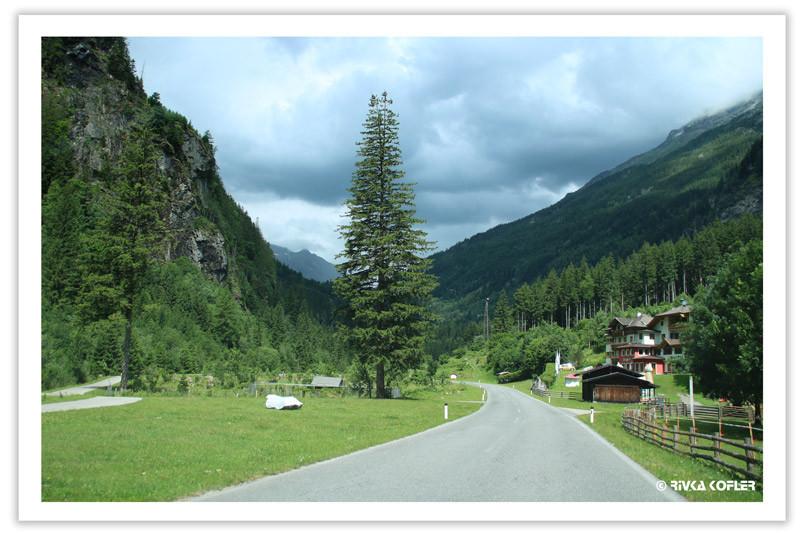 כביש, עצים, כפר