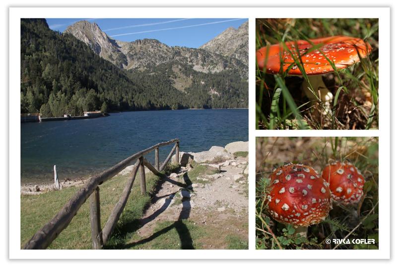 אגם ופטריית אגדות