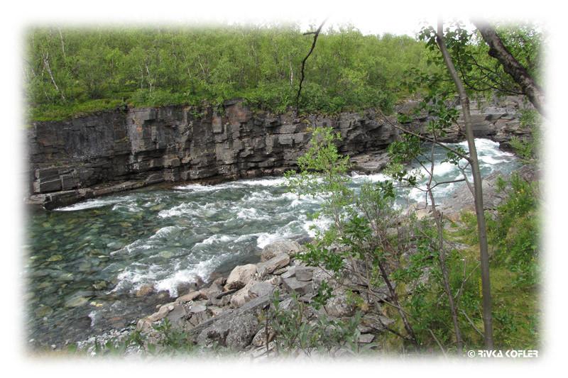 יערות ונהר אביסקו