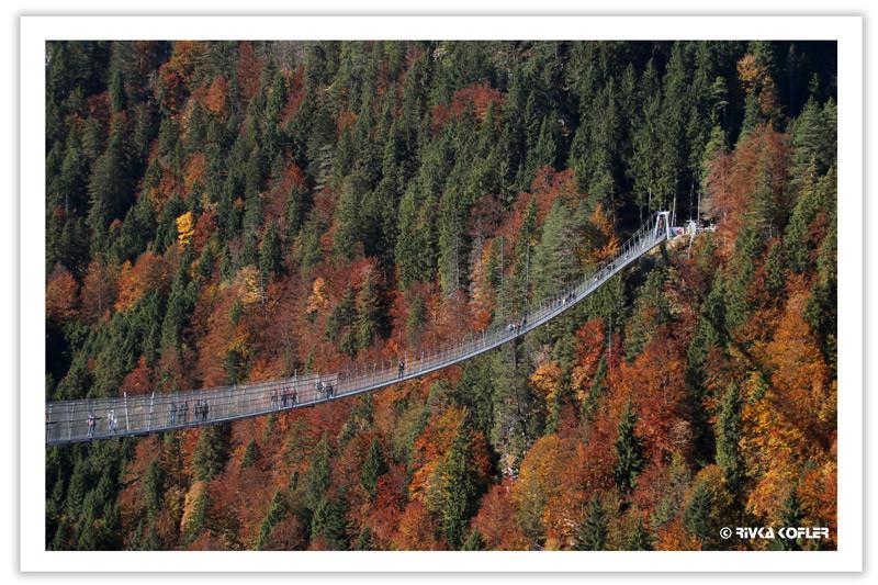 גשר תלוי על רקע עצים בשלכת
