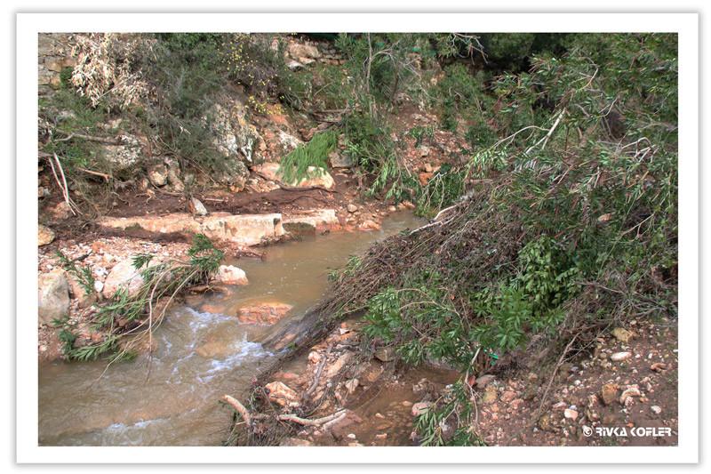 עצים בנחל בצת
