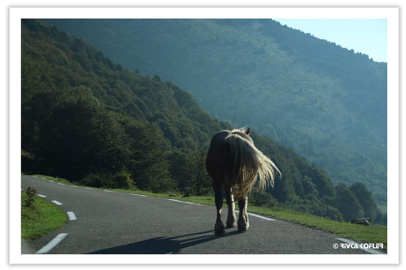סוס על כביש