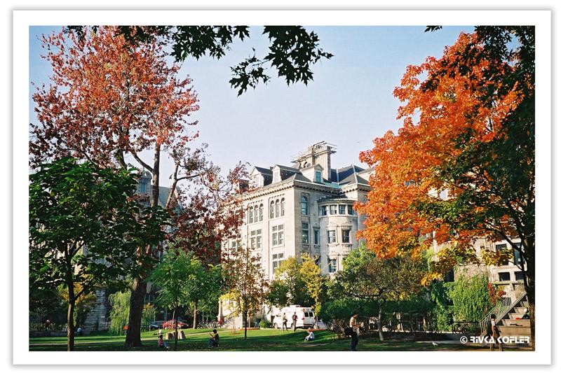 אוניברסיטת מק'גיל ועצים אדומים