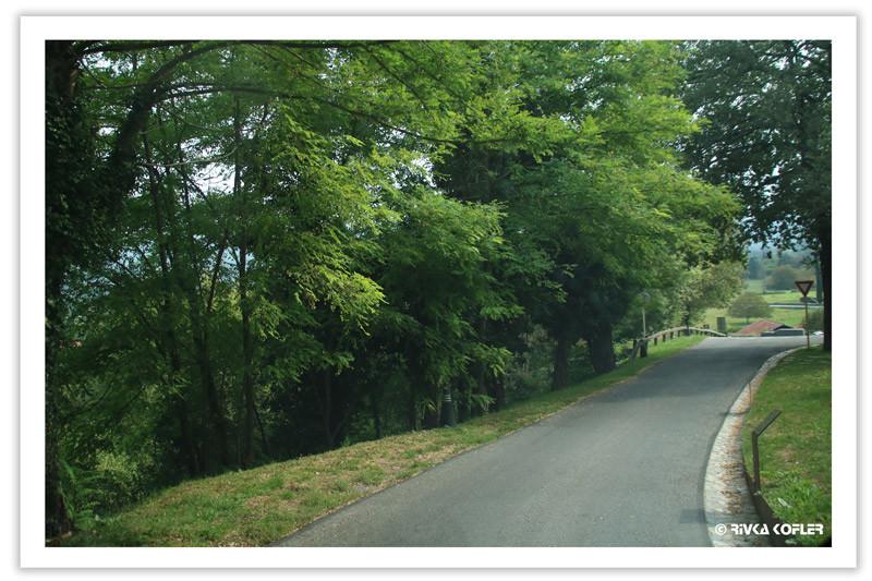 כביש העובר ביער