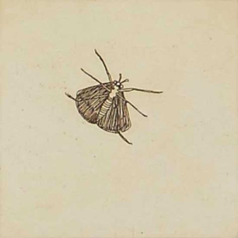 Moth (white)