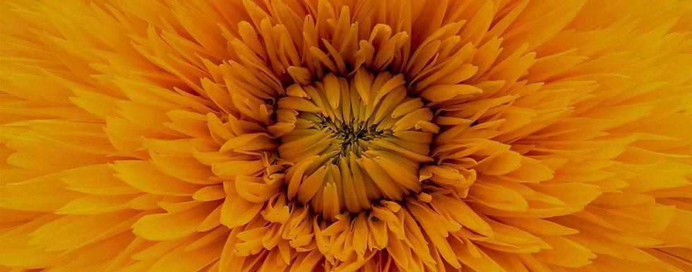 xo_flower copie.jpg
