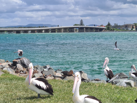 Need Insurance in Forster NSW?