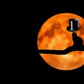 月を見つめるシルクハットをかぶった猫(金星ダンス)