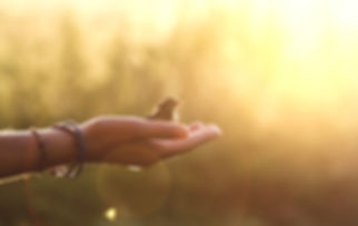 ecology concept - bird on a hand in the
