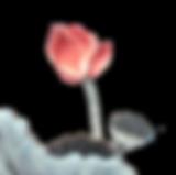 莲花 | 心灵法门 | 加拿大观音堂文化中心