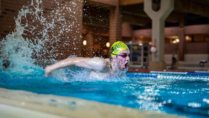Delfin Schwimmen