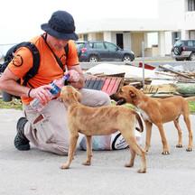 animals-in-communities.jpg