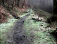Rhyslyn Valley