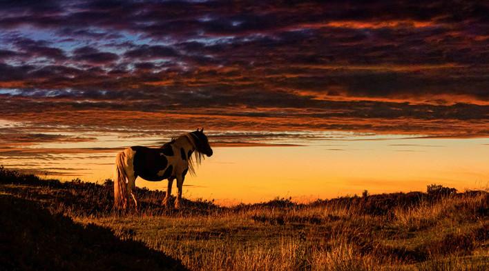 Sundown Pony