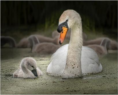Llanelli Wetlands