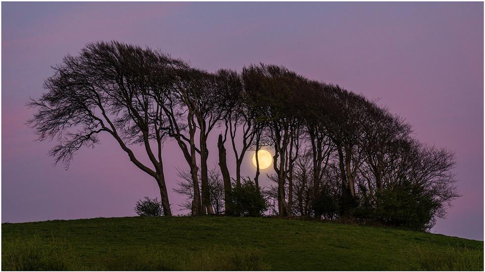 Drover's Moon