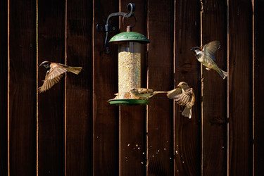 Feathered Feeding Frenzy