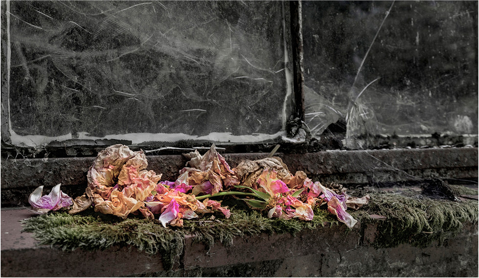 Dead Flowers On The Windowsill