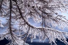 Iced Veins