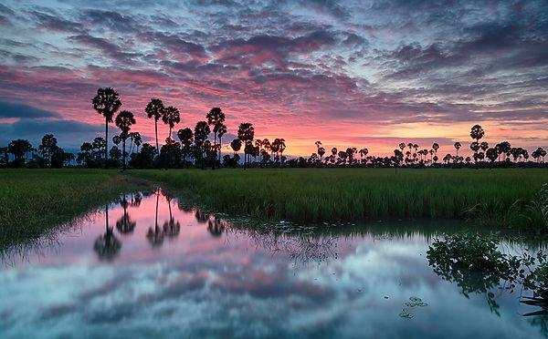 011-Rice Fields Sunrise Cambodia..jpg
