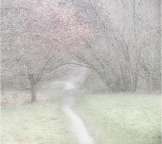 Path Through The Woods