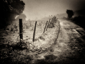 The Rugged Track In Mist