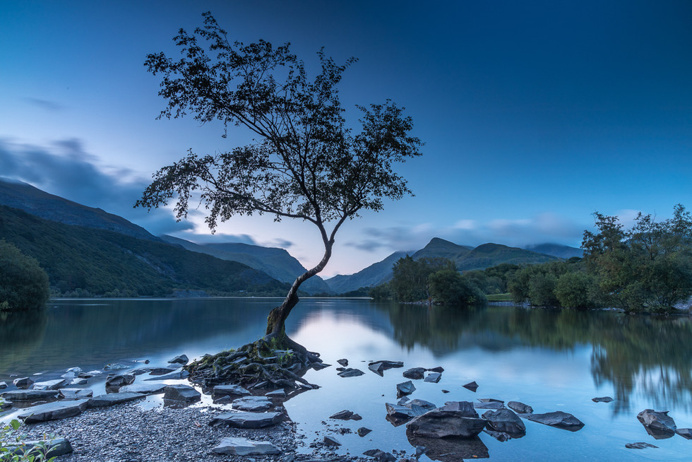The Lone Tree At Blue Hour