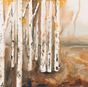 Aspen Trees Study