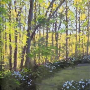 Azalea Woods