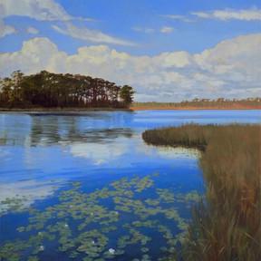 Western Lake Waterlilies