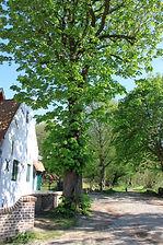 Le moulin du Nekkersgat-Bruxelles-Le parc